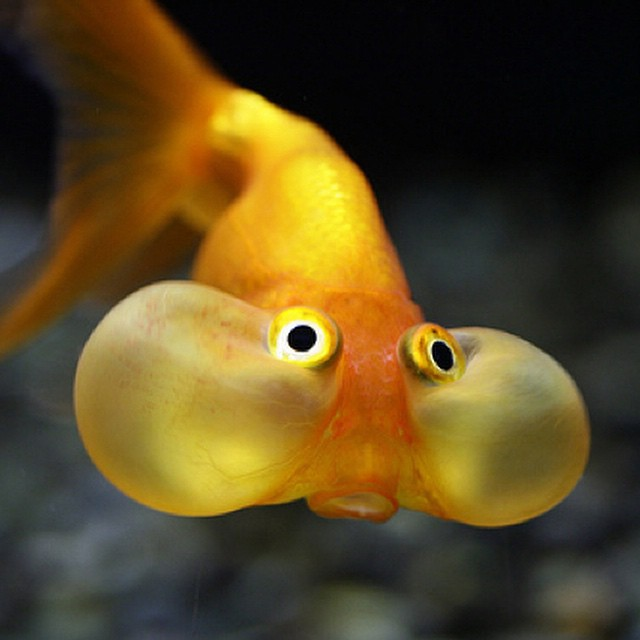 First fish to hold its breath underwater? #fish #habal #هبل