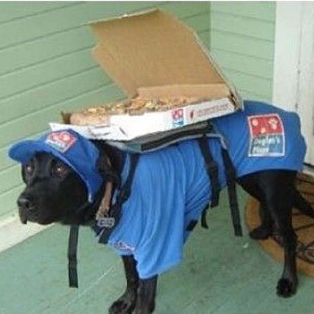 #dominos #nothankyou #dogs #whatdrones #delivery #fail #HabaLdotCom #هبل_دوت_كوم