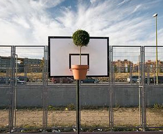 #plant #basketball #green #habal