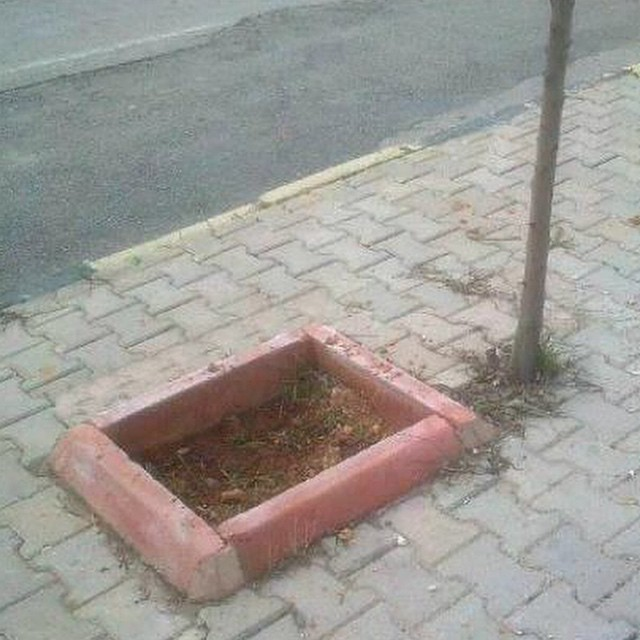 Looks perfect #street #trees #pavement #fail #habal #هبل #HabaLdotCom #هبل_دوت_كوم