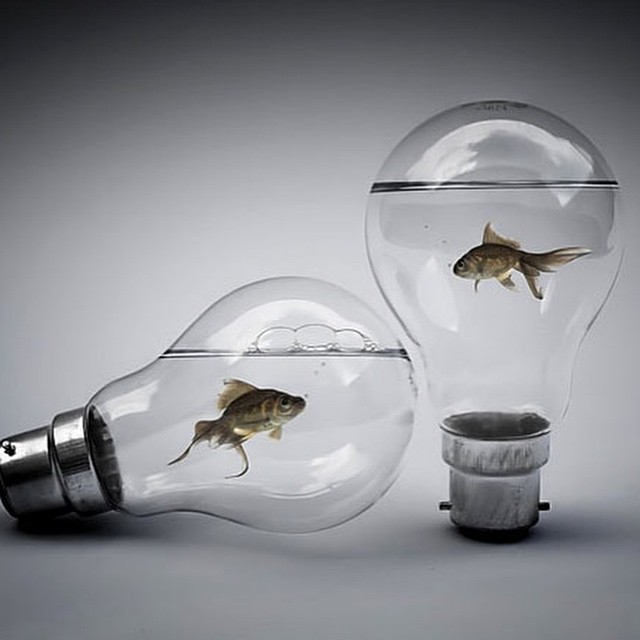#lamba #fish #bulb #aquarium #art #habal #هبل #HabaLdotCom #هبل_دوت_كوم