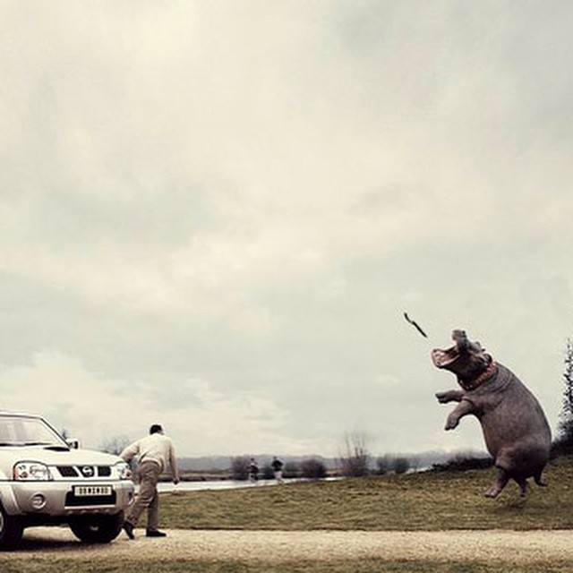 #well #trained #hippo #car #ad #win #habal #هبل #HabaLdotCom #هبل_دوت_كوم