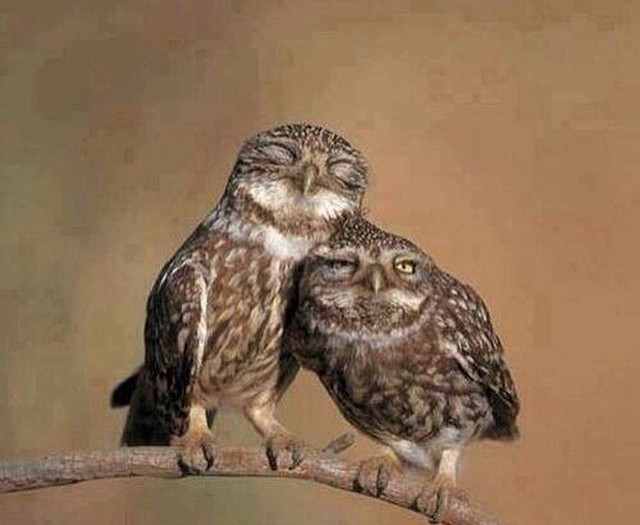 #love is #owl you #need #habal #هبل #HabaLdotCom #هبل_دوت_كوم