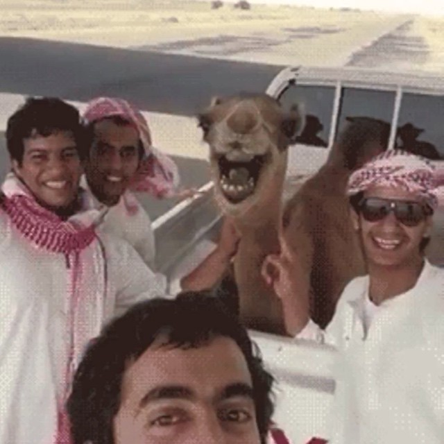 #camel #love #habal #هبل #HabaLdotCom #هبل_دوت_كوم