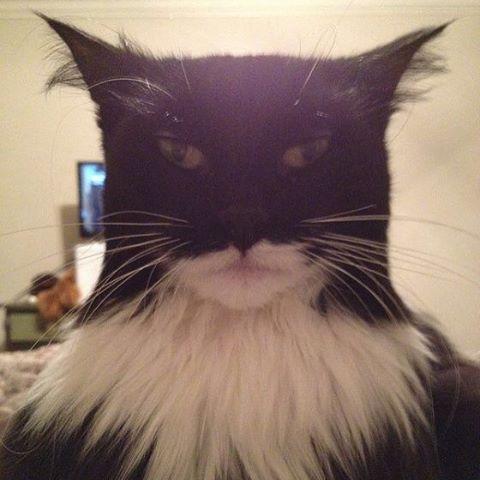 #batmancat #man #cat #confused #habal #هبل #HabaLdotCom #هبل_دوت_كوم