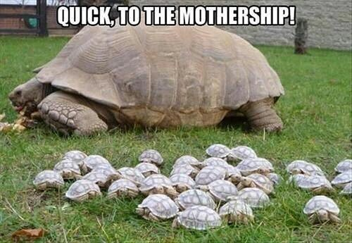 #quickly to the #mothership #turtles #habal #هبل #habaldotcom