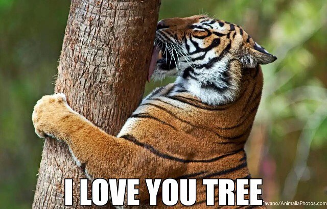 #tiger #tree #love #habal #هبل #habaldotcom