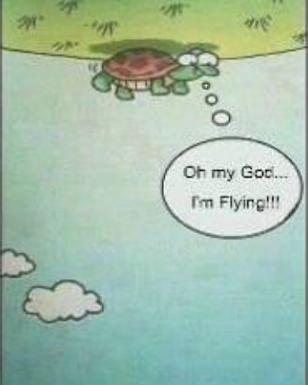 #you too can be a #flying #turtle #perspective #habal #هبل #habaldotcom