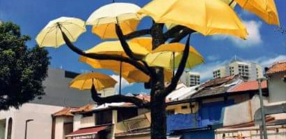 #umbrella #tree #art #win #habal #هبل #habaldotcom
