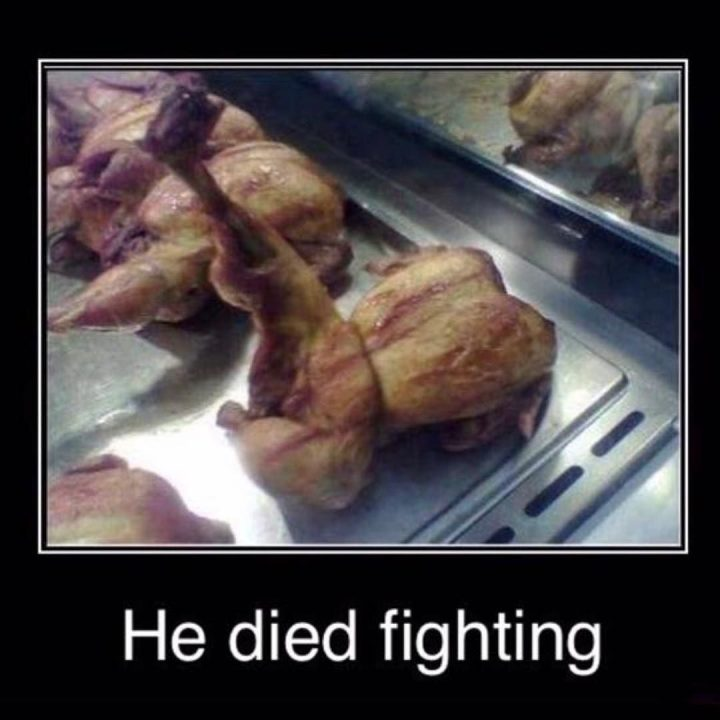 #fighting #chicken #alwaysinourhearts #habal #هبل #habaldotcom
